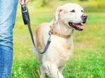 犬 ペット ガン