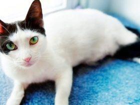 猫 ガン ペット