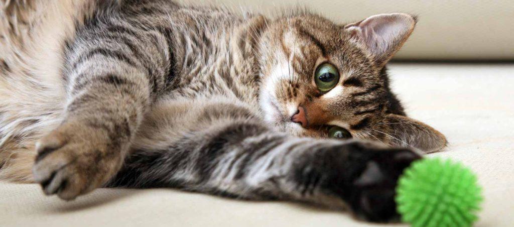 猫 癌 治療