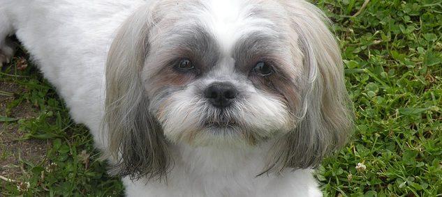 癌 ペット 犬